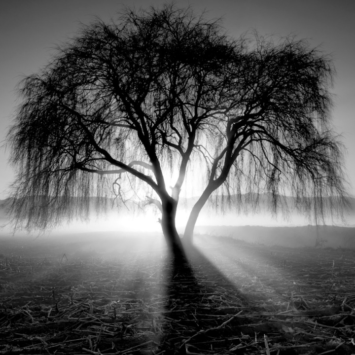Lighting-Tree by Moises Levy