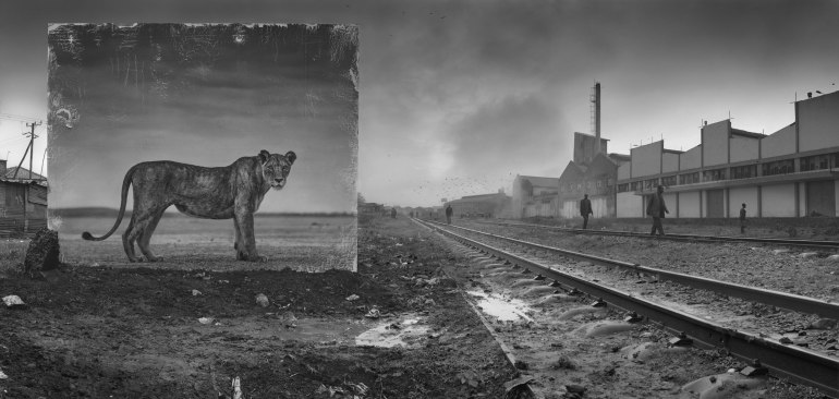 RAILWAY-LINE-WITH-LIONESS