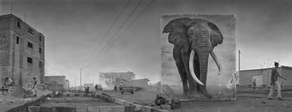 ROAD-WITH-ELEPHANT