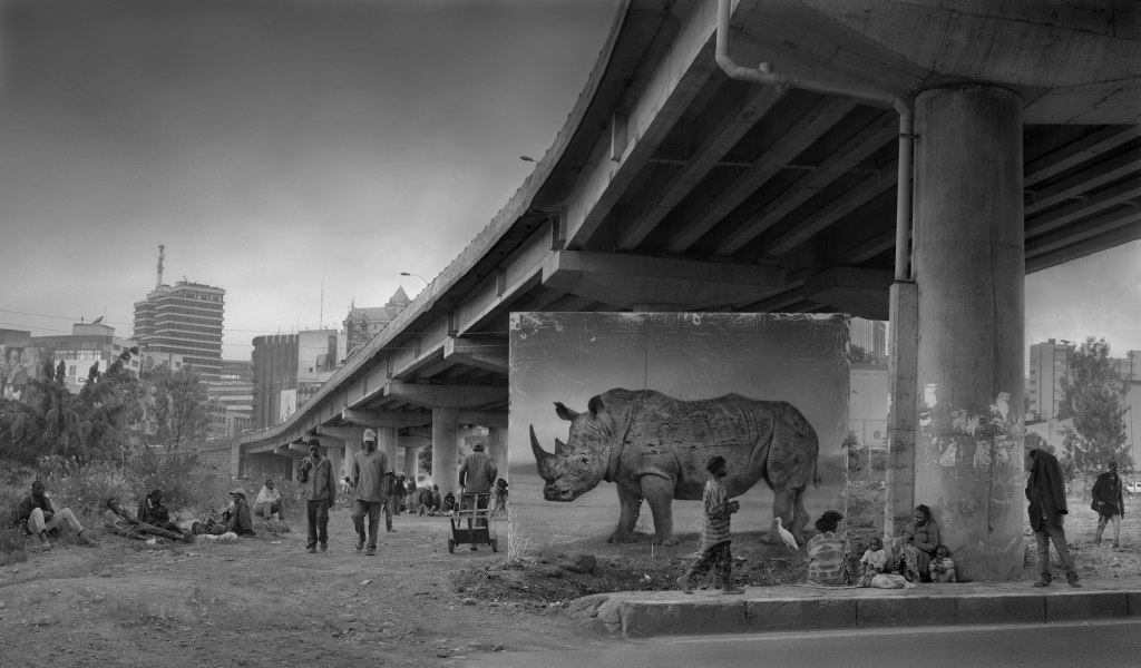 UNDERPASS-WITH-RHINO-and-EGRET