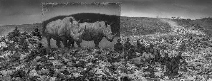 WASTELAND-WITH-RESIDENTS-and-RHINOS