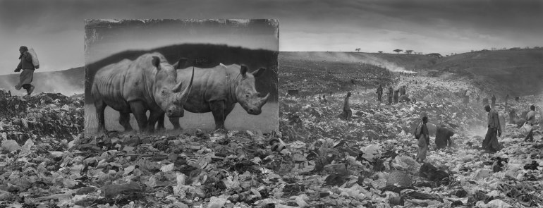 WASTELAND-WITH-RHINOS