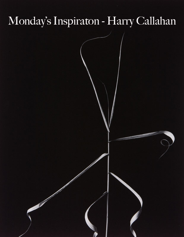 Monday's Photography Inspiration – Harry Callahan